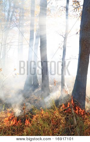 fire in wood