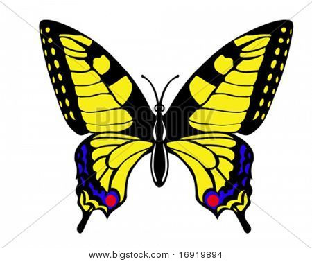 vector drawing butterfly swallowtail on white background