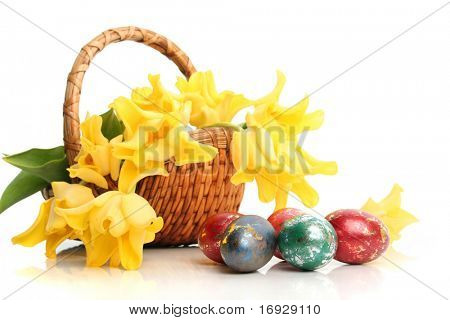 Easter colored eggs and yellow tulips in grass