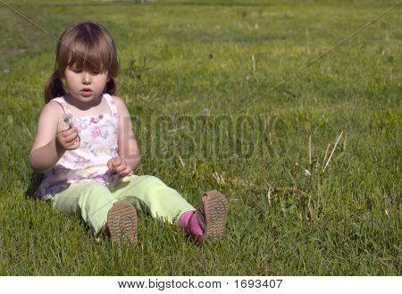 Little Girl And Dandelion