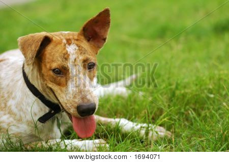 Dog Resting On Ground