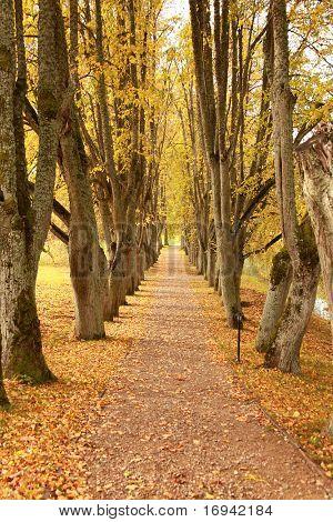 beautiful golden autumn wayside trees
