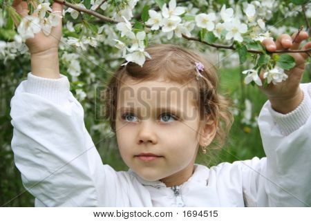 Little Girl And A Blossoming Cherry