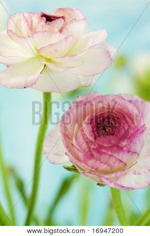 tiro floral suave, com profundidade de campo