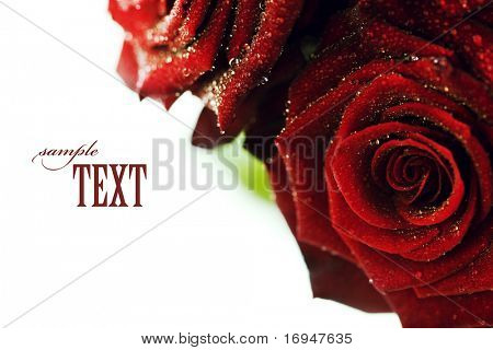 red roses with water droplets on white background with sample text