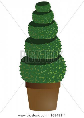 amenity tree in pot