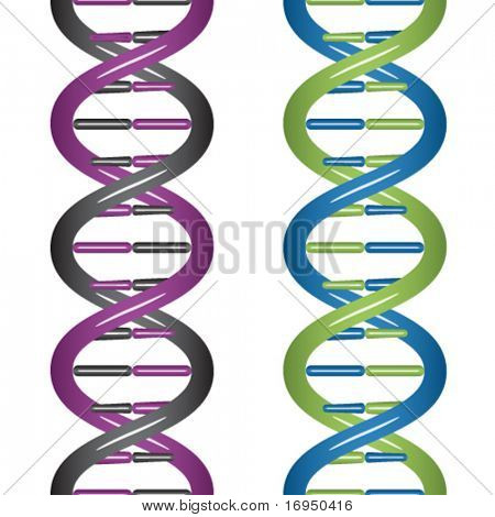 vector seamless DNA