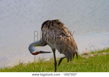 One Leg Crane