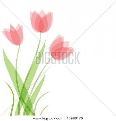 Tulip flowers. Vector background