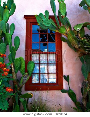 Bario Window With Cactus