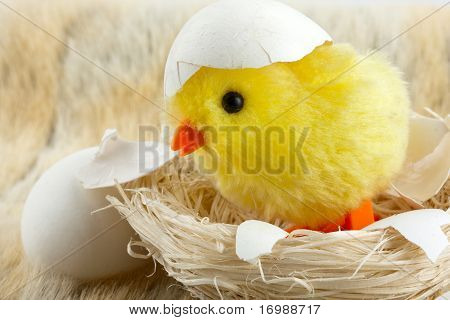 Toy Baby Chicken With Eggshell