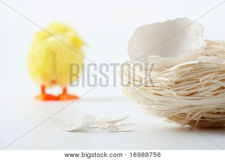 Nest With Eggshell Cracks And Walking Away Chicken