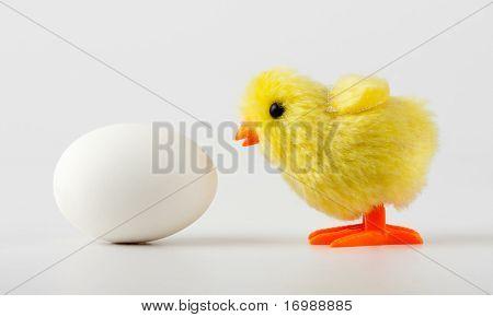 Baby-Huhn Betrachtung Ei