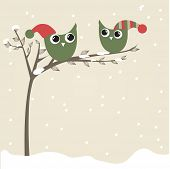 image of snow owl  - Owls couple in christmas hats on the tree branch - JPG