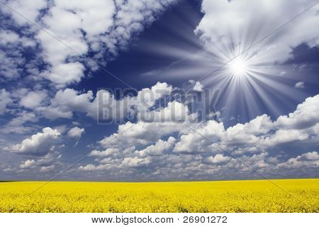 Yellow meadow under blue sky with clouds