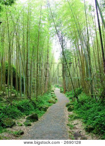 Sidewalk In Bamboo Trees