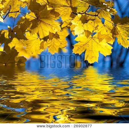 Beautiful yellow autumn maple leaves. Autumn concept.