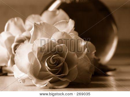 Roses In Sepia Tone