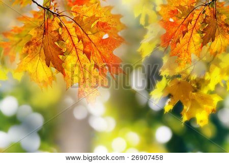 Leaves on the branches in the autumn forest.