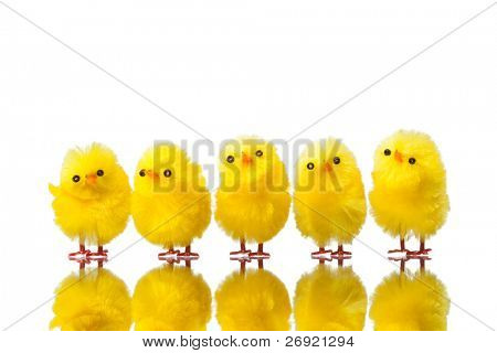 easter chicks isolated on white