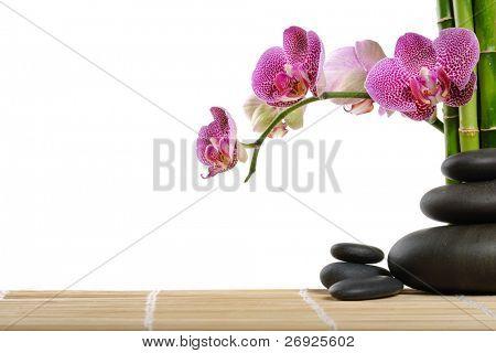 Orchid und Steine