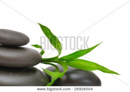 Zen stones and plant on the white background