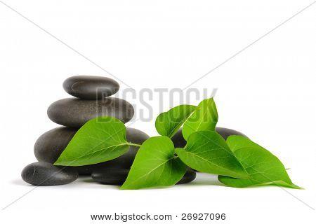 Zen Stones und Pflanzen auf dem weißen Hintergrund