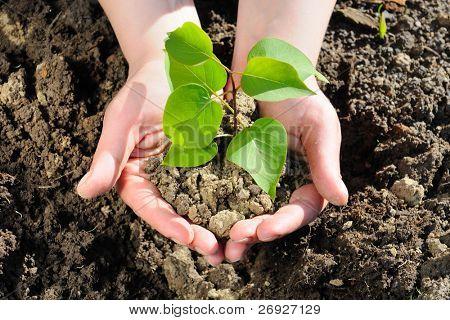 Verde de la planta en la mano