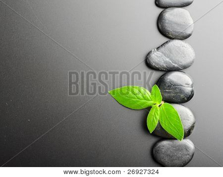 Zen stones and plant on the black background