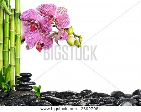spa frame from bamboo grove, pink orchid and black zen stones on the white background
