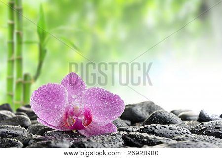 Zen piedras y Orquídea en el agua