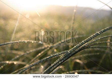Rocío en una hierba. Salida del sol.