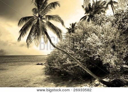 Infrared tropical beach and palm tree background