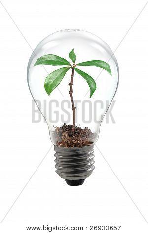 bulb tree lamp