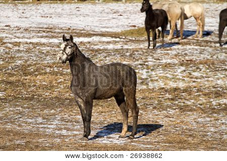 Horse in the winter scenery
