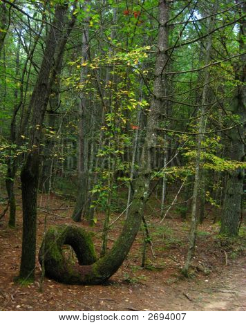 Loopy Tree Trunk