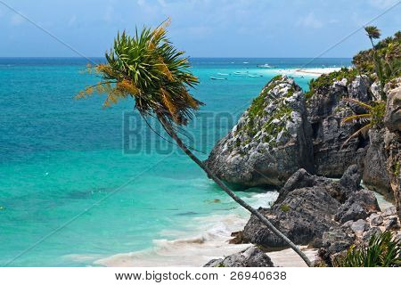 Palm tree on the cost of Tulum - Mexico