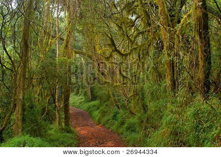 Temperate cloud forest in Limpopo, SA
