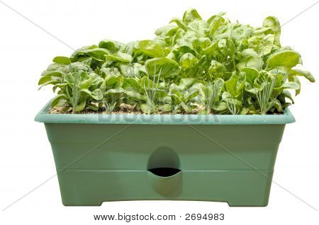 Intensive Container Gardening - Vegetables, Isolated