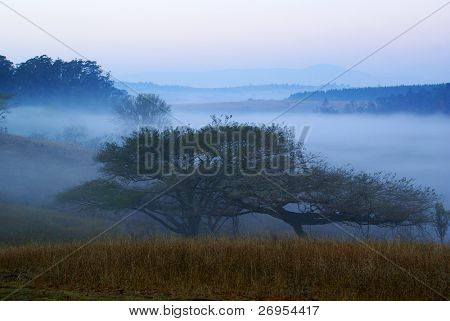 Misty dawn in Swaziland, Africa