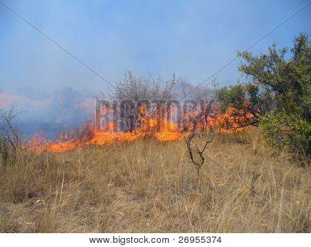 Wildvuur in Savanne (Zuid Afrika)
