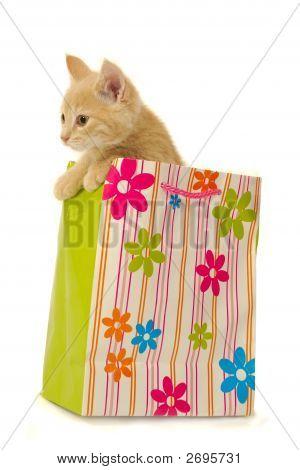 Kitten And Shopping Bag