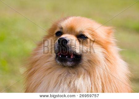 Hund hübsch
