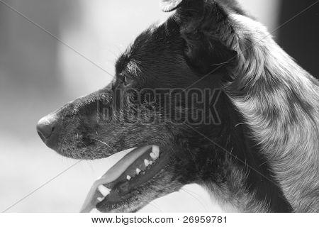 Sad abandoned dog asking for love