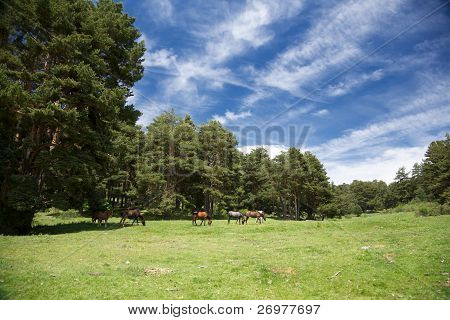 Landscape With Horses In Gredos