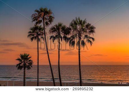 California Beach Palm Trees At