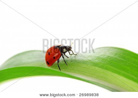 Images of ladybird sitting on the green shoots