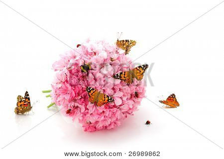 The image of a butterfly, ladybirds and bumblebee sitting on the bouquet of pink flowers