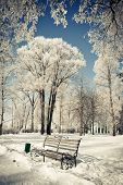 foto of winter landscape  - Beautiful winter landscape with snow covered trees - JPG