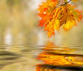 picture of fall leaves  - Bright colored leaves on the branches in the autumn forest - JPG